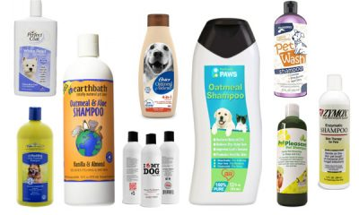 Best Dog Shampoos best shampoos for pets Top Rated 10 Best Dog Shampoos 2021
