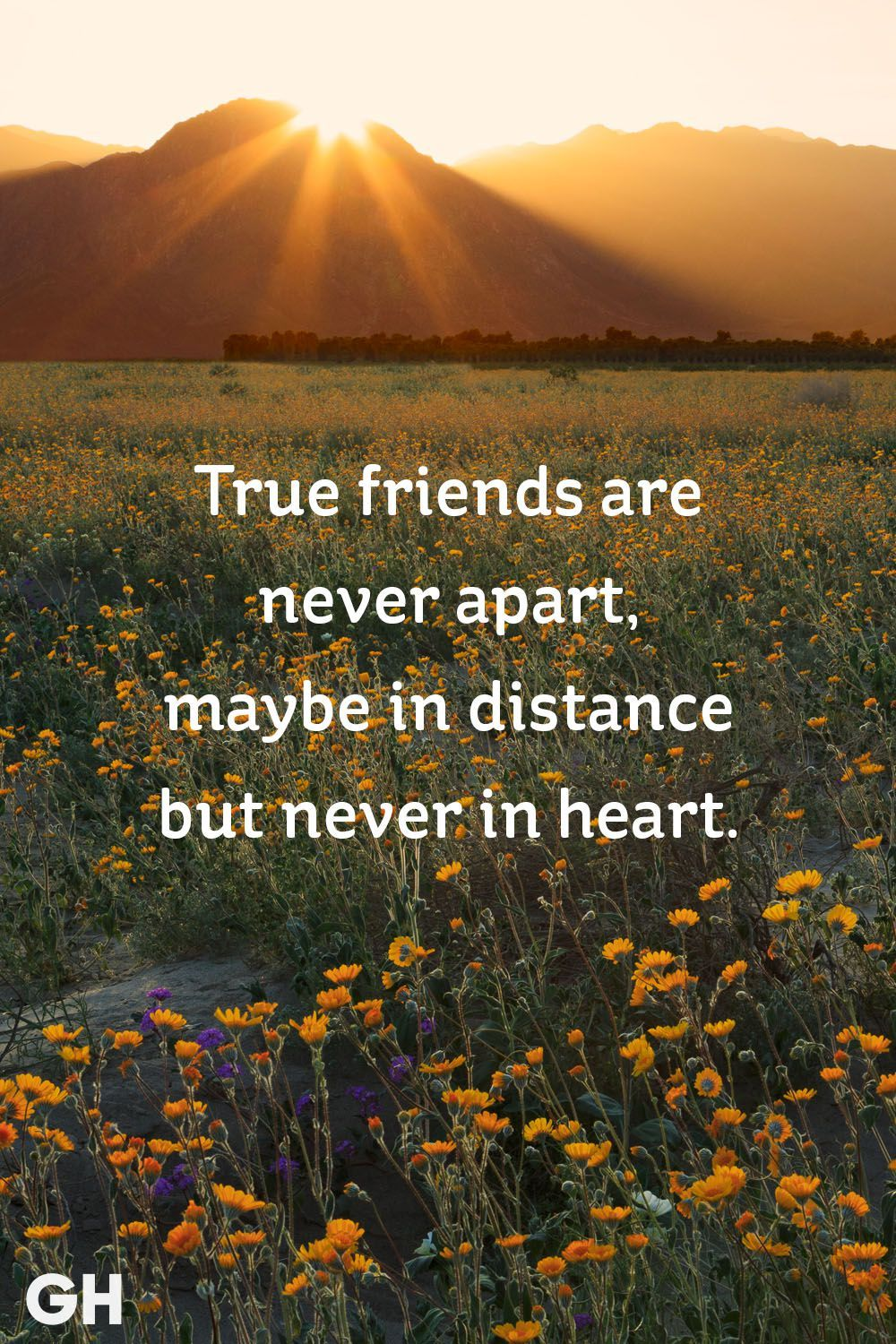 20 Short Friendship Quotes to Share With Your Best Friend - Cute ... | Friend  quotes distance, Long distance friendship quotes, Short friendship quotes
